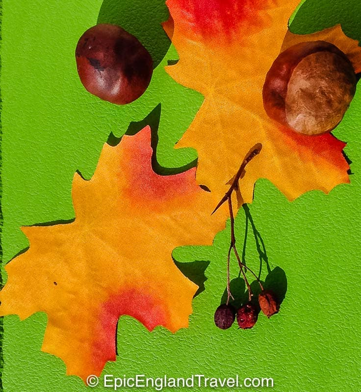 flatly of fall leaves and conkers on a green background